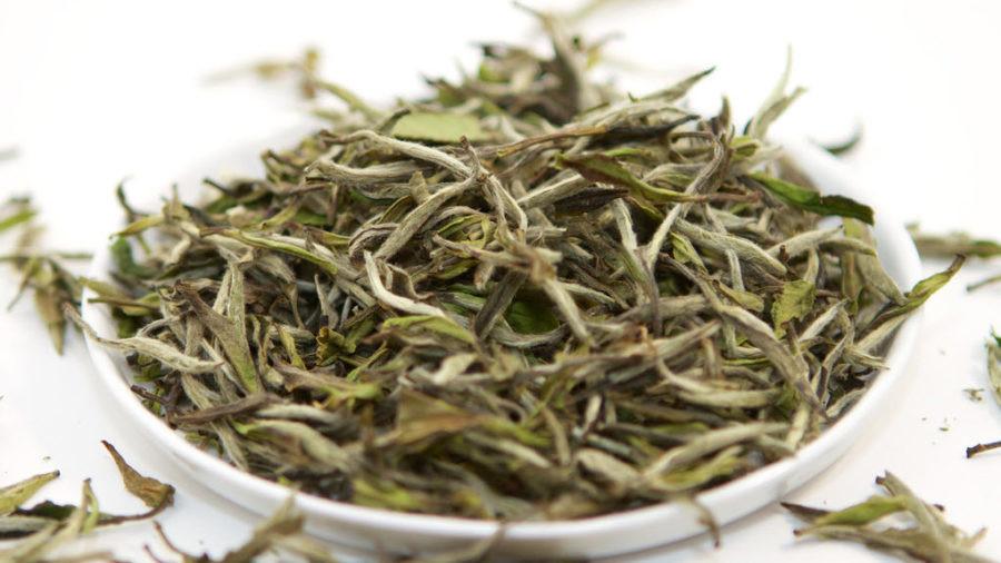 weißer Tee Wirkung